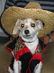 cowboy hond