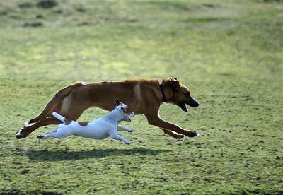 honden rennen